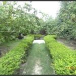 Inhouse Medicinal garden to grow medicinal plants