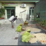 Herbs being sorted at Dr. Asma Herbals Factory